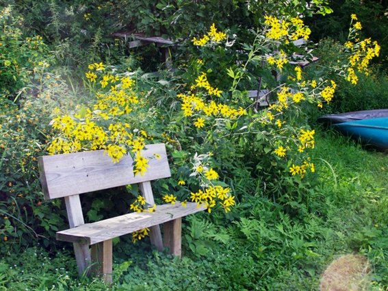 Flowers all around a bench